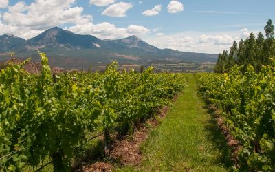 The High Vineyards of Colorado