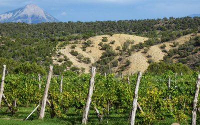 Behind the Vines: Leroux Creek Vineyards