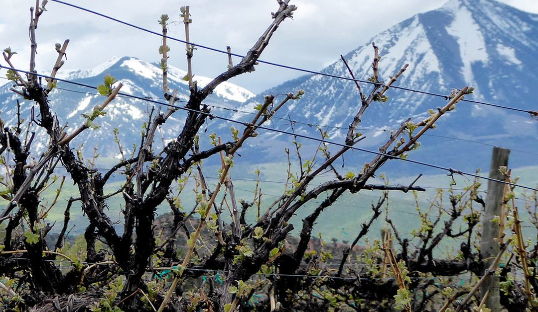Shadows from the Starlight: Visiting Colorado Wine Country
