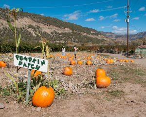 Pumpkin Patch @ Black Bridge Winery | Paonia | Colorado | United States