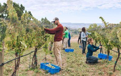 Local Motion: Colorado Agritourism