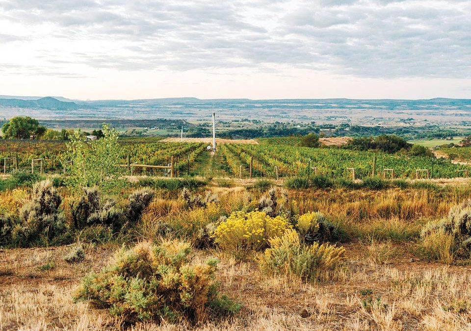 Wine Spectator on Rocky Mountain Wines