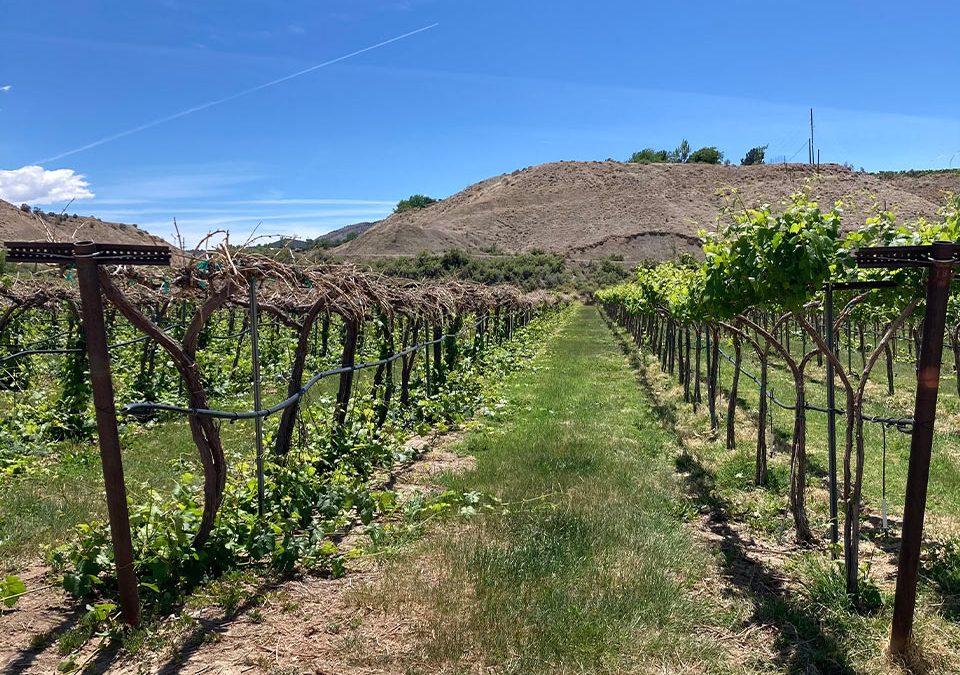 Wine Grape Loss for the 2021 Growing Season